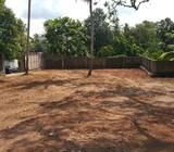 Clean bare land with fruit trees and a well