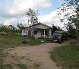 young cocunut plantation for sale