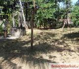 100 Perches Land for Sale at Seeduwa