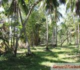100 Perches Land for Sale in Bemmulla