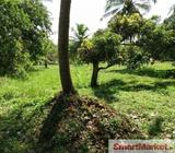 A Valuable 100 Perches Coconut Land for sale in