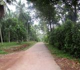 Well Cultivated Land for Sale in Yakkala.