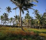 Beach front land at Dungalpitiya