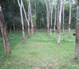 Rubber cultivated Land