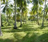Coconut land for sale at Thulhiriya