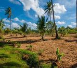 (LS170) 20 acre Coconut Estate for Sale