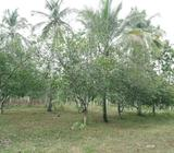 10 Acres Land for Quick Sale at Divulapitiya