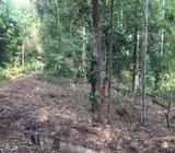 Land for sale in lewalla amunugama