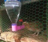 bird water feeder
