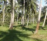 Coconut Land available for Sale in Dambadeniya