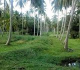 Coconut Land available for Sale in Giriulla.