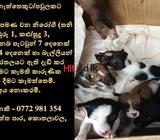 dogs for kind homes