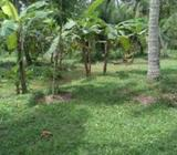 01 Acres Land in Divulapitya