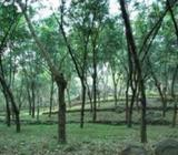Bare Land for long lease in Horana