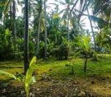 Coconut Land for Sale - Ja- Ela