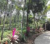 Land for Sale in - Eheliyagoda