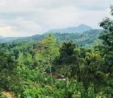 Tea and Rubber Estate for Sale in Neluwa