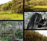 19 Acres Land Sale Kalutara