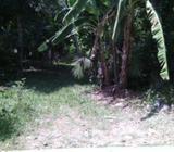 Land for Sale Ja Ela - Bandigoda