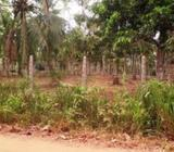 Coconut Estate for sale in Kuliyapitiya