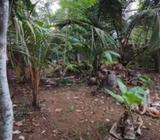 Residential Land for Sale in Matara