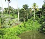Eco Friendly Agricultural Land for Sale at Mirigama, Gampaha