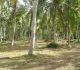 Coconut Land in Kurunegala / Hettipola