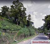 Well Cultivated 5 Acres Land for Sale Kitulgala