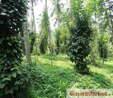 Well Cultivated 152 Perches Land for Sale in