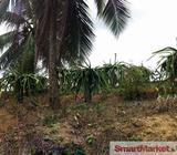 Well Cultivated Land for Sale in Yakkala