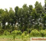 Ambalangoda Land With Mahogany, Teak and Coconut Trees