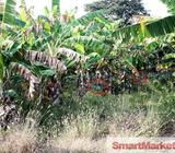 Extend of the land for sale