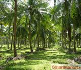 Coconut Estate for sale