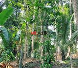 land for sale katugastota | land for sale kandy | land for sale central province