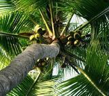 Coconut Estate For Sale In Kurunegala