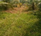 48 Acres Coconut Land for Sale in Kuliyapitiya
