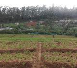 Land in Nuwara eliya