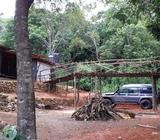 Estate land for sale in Nilambe - Kandy. Rs 30,000 per perch