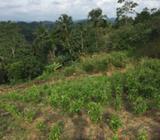 Land for sell near KURUDUWATHTHA,GALLE