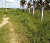 5 Acres Coconut land for sale