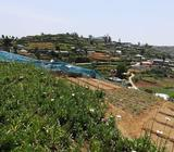 100 perches land with house sale