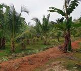 2.5 Acre Valuable Property for Sale in Divulapitiya