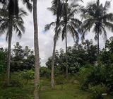 80 Perches Land for Sale in Mandawala, Kirindiwela