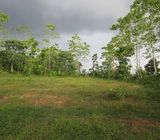 Paddy field facing Land for Sale in Padukka.