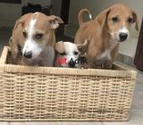 pups look for kind home(s)