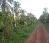 90 Perches Rambutan Land/ Ideal Future Investment
