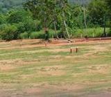 Last Opportunity from Rock View Garden ; Dambulla