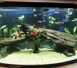 fish tank decoration ornaments for sale