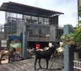 Azharuddin Aqiqah Farms Colombo