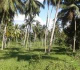 Coconut Land available for Sale at Giriulla
